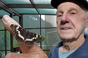 Norm Twigge was been breeding the Honshu white admiral butterfly for the past two years. Photo/ George Novak