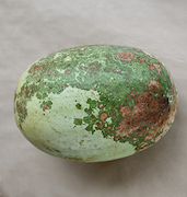 <p>Photo 1.&nbsp;<EM>Papaya ringspot virus-W</EM> on watermelon (Tonga), showing characteristic ring patterns. &nbsp;</p>
